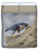 Peregrine Cleaning Beak Duvet Cover