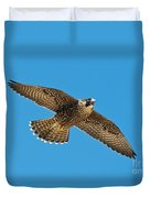 Peregrine Young Screaming For Food Duvet Cover