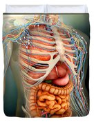 Perspective View Of Human Body, Whole Duvet Cover by Stocktrek Images