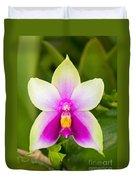 Phalaenopsis Bellina Duvet Cover