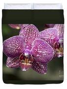 Phalaenopsis Helen Alice Mary 2220 Duvet Cover