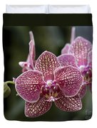 Phalaenopsis Helen Alice Mary 2346 Duvet Cover