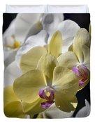 Phalaenopsis Orchids 2777 Duvet Cover