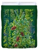 Pine Cones On Spruce Tree In Rancheria Falls Recreation Site-yt Duvet Cover