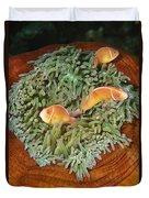 Pink Anemonefish Trio Papua New Guinea Duvet Cover