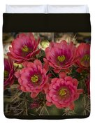 Pink Hedgehog Cactus Flowers  Duvet Cover