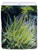 Pink Tipped Giant Sea Anemone Duvet Cover