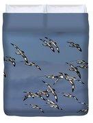 Pintado Petrel Flock Flying Antarctica Duvet Cover
