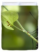 Pipevine Swallowtail Mother With Eggs Duvet Cover