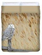 Plum Island Snowy Owl On A Fence Post Duvet Cover