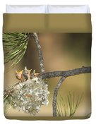 Plumbeous Vireo Begging Arizona Duvet Cover by Tom Vezo