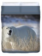 Polar Bear In The Sunshinechurchill Duvet Cover