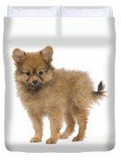 Pomeranian Puppy Dog Duvet Cover