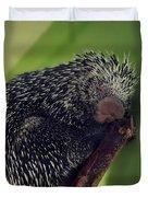 Porcupine Slumber Duvet Cover