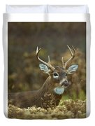 Portrait Of A White Tailed Buck Duvet Cover