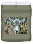 Portrait Of Mouflon Ewe Duvet Cover