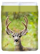 Portrait Of Mule Deer Buck With Velvet Antler  Duvet Cover