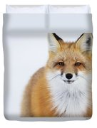 Portrait Of Red Foxchurchill Manitoba Duvet Cover