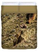 Posing Bighorn Sheep Duvet Cover
