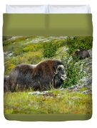 Protecting Muskox Duvet Cover