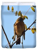 Puffed Breasted Robin Duvet Cover