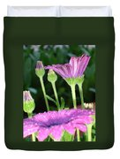 Purple And Pink Daisy Flower In Full Bloom Duvet Cover
