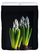 Purple Hyacinth Ready For Spring. Duvet Cover