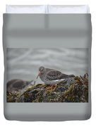 Purple Sandpiper 2 Duvet Cover