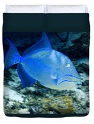 Queen Triggerfish Duvet Cover