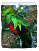 Quetzal Duvet Cover