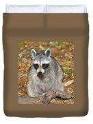 Raccoon Procyon Lotor Adult Foraging Duvet Cover