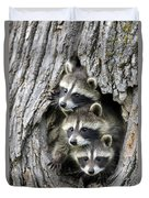 Raccoon Trio At Den Minnesota Duvet Cover by Jurgen and Christine Sohns