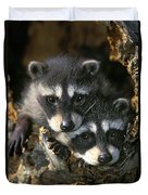 Raccoon Young Procyon Lotor In Tree Duvet Cover