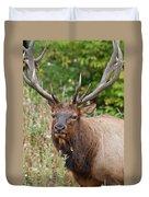 Racked Roosevelt Elk Duvet Cover