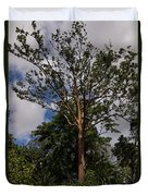 Rainbow Eucalyptus - Tall Proud And Beautiful Duvet Cover