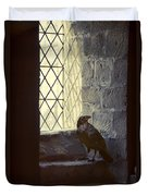 Raven By Window Duvet Cover
