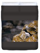 Razorbill Bird Duvet Cover