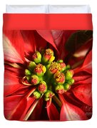 Red And White Poinsettia Flower Duvet Cover by Catherine Sherman