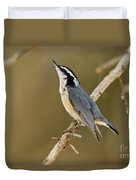 Red-breasted Nuthatch Pictures 76 Duvet Cover
