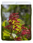 Red Buckeye - Aesculus Pavia - Wildflowers Duvet Cover