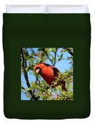 Red Cardinal In Springtime Duvet Cover
