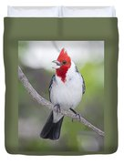 Red Crested Cardinal Duvet Cover