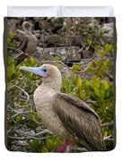 Red-footed Booby Galapagos Islands Duvet Cover