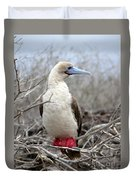Red-footed Booby Duvet Cover