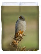 Red Footed Falcon Falco Vespertinus 1 Duvet Cover