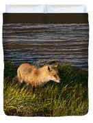 Red Fox Hunting The Edges At Sunset Duvet Cover