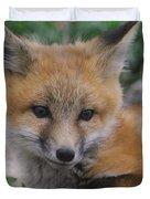 Red Fox Kit Stays Alert Duvet Cover