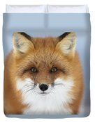 Red Fox Staring At The Camerachurchill Duvet Cover