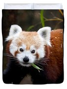 Red Panda  Ailurus Fulgens Eating Duvet Cover