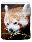 Red Panda  Ailurus Fulgens In Captivity Duvet Cover